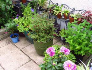 Plants-in-waiting get a revamp