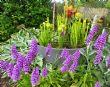 Rachel's & Philip Hollwey's gardens 28.06.15
