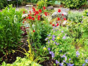 Hazel's garden