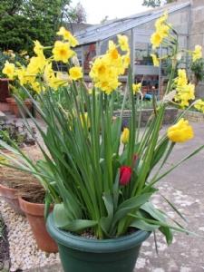 Clara's spring pot