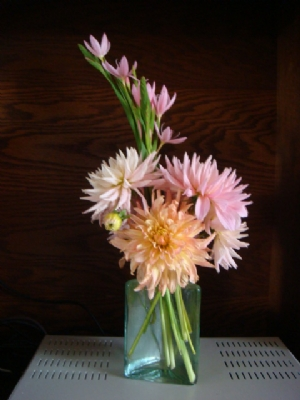 Dahlias and Pink Kaffir Lillies