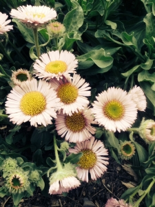 Flower I D