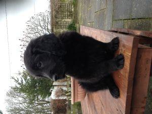 New boy Dog number 4