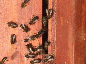 Gardening Bee Association