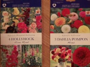 Dahlia & Hollyhock