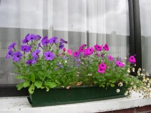 Annuals flowering 1.7.10
