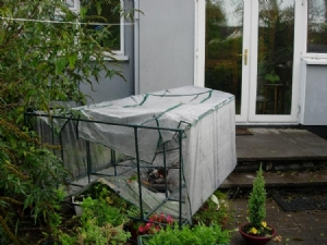 Plastic greenhouse bites the dust