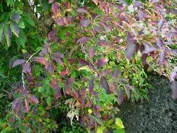 Leaves ...for Fran
