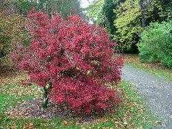 Autumn colour in Fota