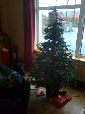 my christmas tree by day