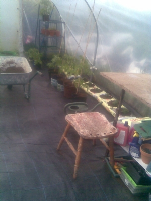 The tomatoes and some of the grow bags