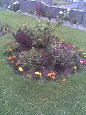 a small part of my front garden