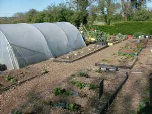 Filling up,the main vegetable beds.