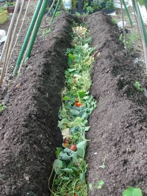Trench composting  plan for over winter..