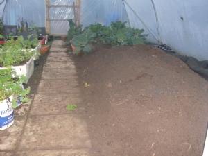 Root crop bed.