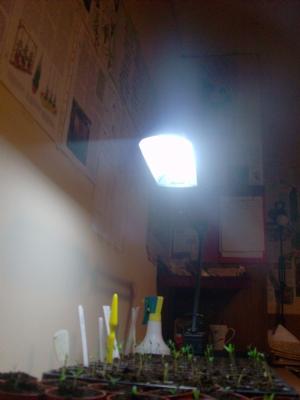 Single tray seed room lighting.