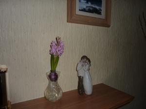 Lidil Hyacinth