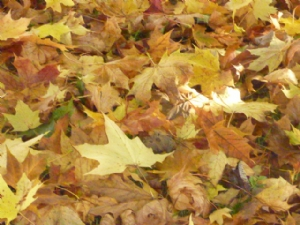 Leaves at Dunamon Castle