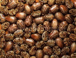 Ricinus seeds