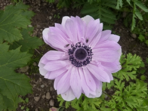 Anemone to brighten our day