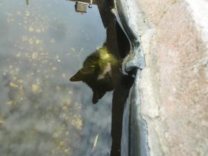 Frogs beware!