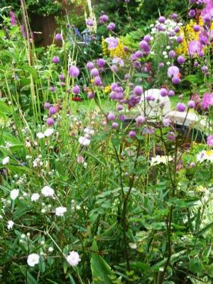 Gypsophila and thalictrum delevayi 'Hewitt's Double'