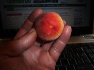 Aint this peachy!