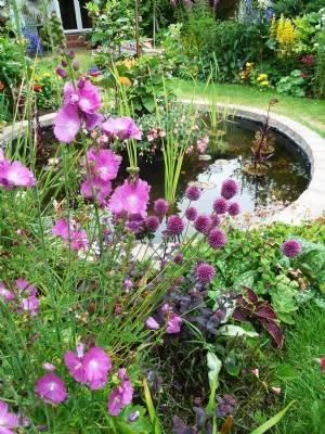 Sidalcea, purple sedum, allium sphaerocephelon & coleus