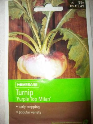 Turnip 'Purple Top Milan'