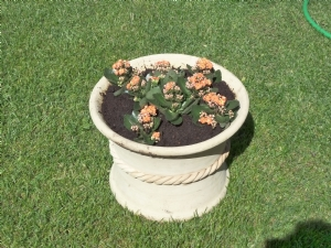 Outdoor Autumn Kalanchoe in Handcrafted Pot