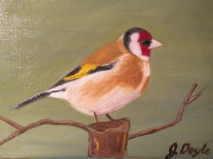 My very own Goldfinch