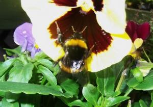 Just buzzing around
