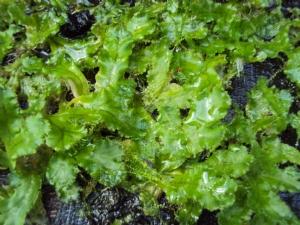 Is it a fern, or moss?