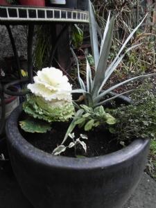 Variegated planter