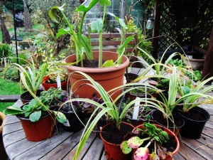 I'm getting to like gardening!