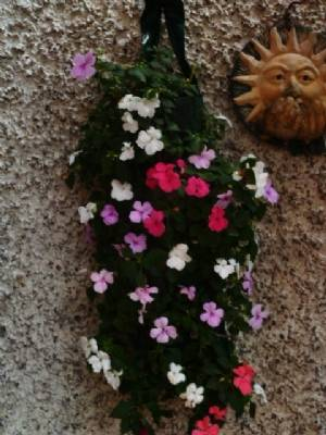 Flower pouch with impatiens