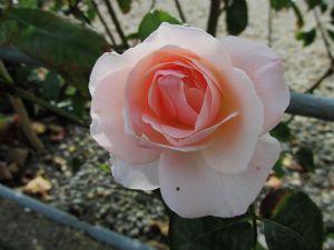 R. 'Penny Lane'