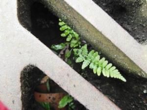 Opportunistic fern