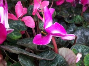 December Bee