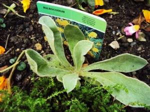 Unplanned seedling