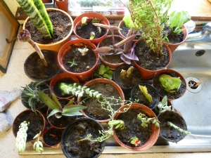 Trish's contributions to my houseplants!