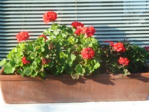 Still flowering 19th December