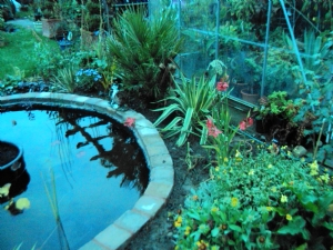 New Greenhouse/Pond border today