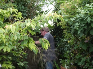 Chopping down the Lilac tree