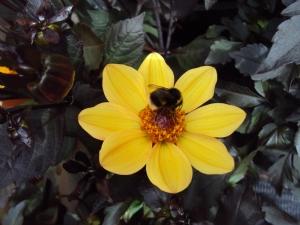 Bee ootiful