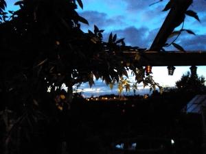 Evening Canopy