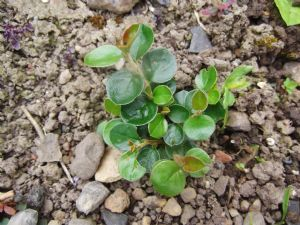 Plant ID please!