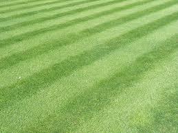 Manicured lawn (yukk)