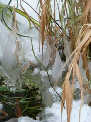 Icicles on Pond (09.12.10)