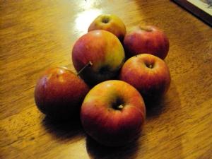 'Elstar' apples 11.11.10